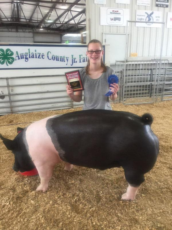 Our Past Winners - BROWN SHOW PIGS